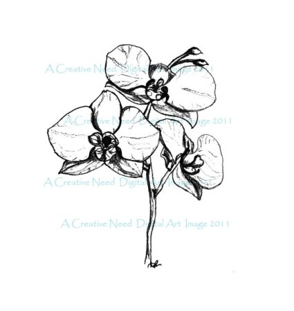 ACreativeNeed Orchids w